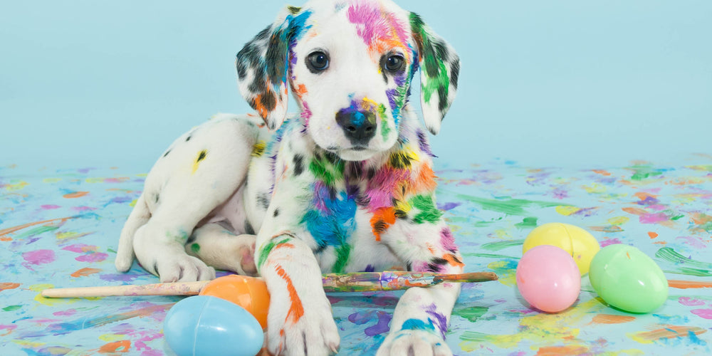 Fun Easter Activities that Include Your Pet!