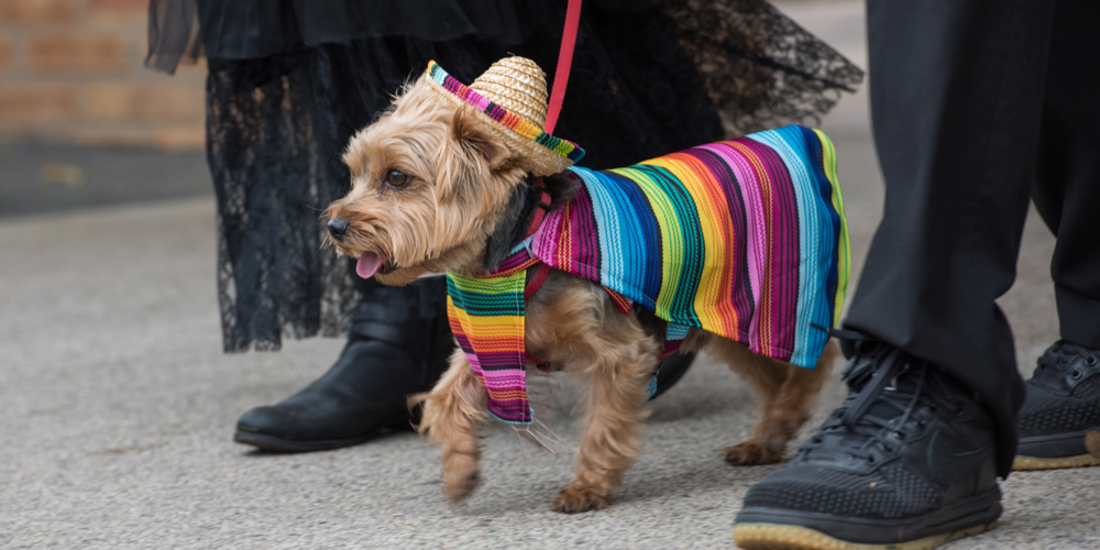 Turning A Cinco De Mayo Fiesta Into A Pawty