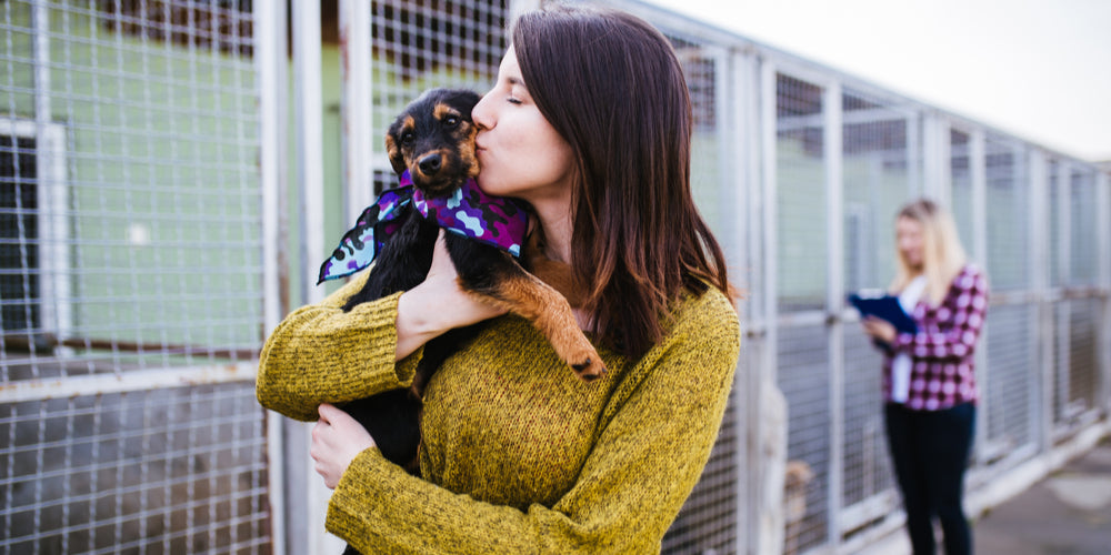 Why Kill-Shelters Deserve Your Love and Support