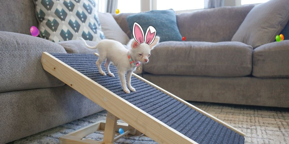 Easter Gift Ideas For Your Pet!