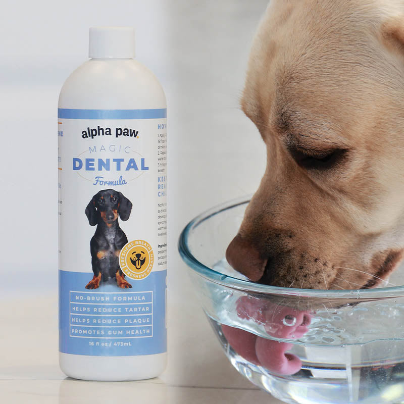 Magic Mouthwash for Dogs