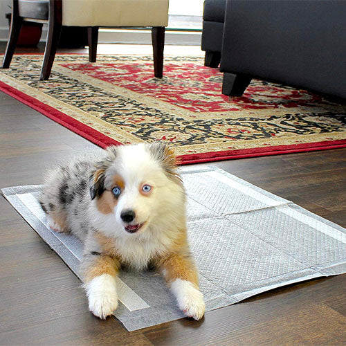Deluxe Puppy Pads & Dog Training Pads