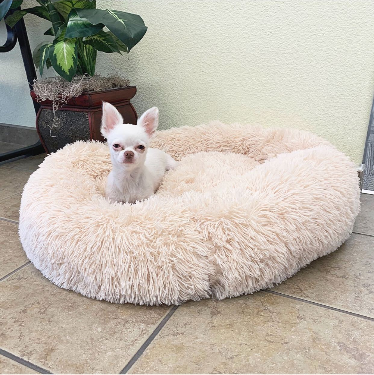 Cozy Calming Bed for Dogs