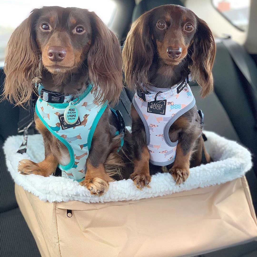 Dog Car Safety Seat