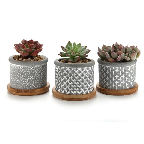 Ceramic pots for succulents