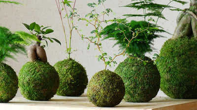 Kokedama moss ball pot