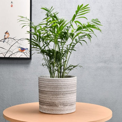 porcelain planter for indoor