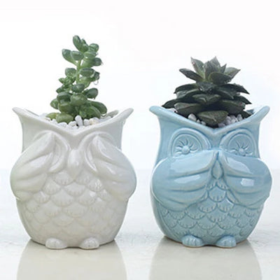 Three Wise Owls - ThepotplantCo