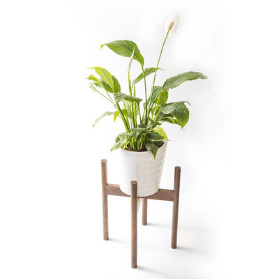 Wooden Plant Stand - ThepotplantCo