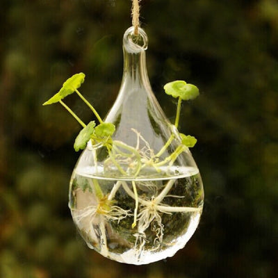 Hanging Teardrop Propagation Flower Holder