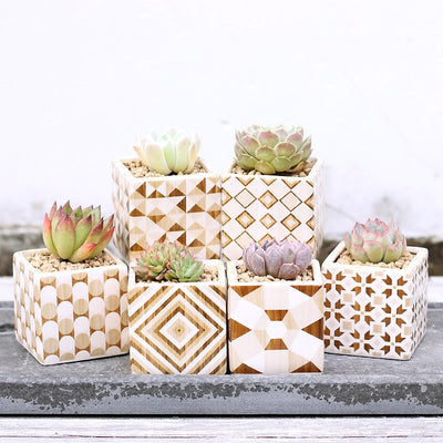 Modern Wood & Ceramic Square Pots