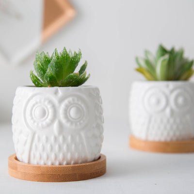 Small White Owl Planter