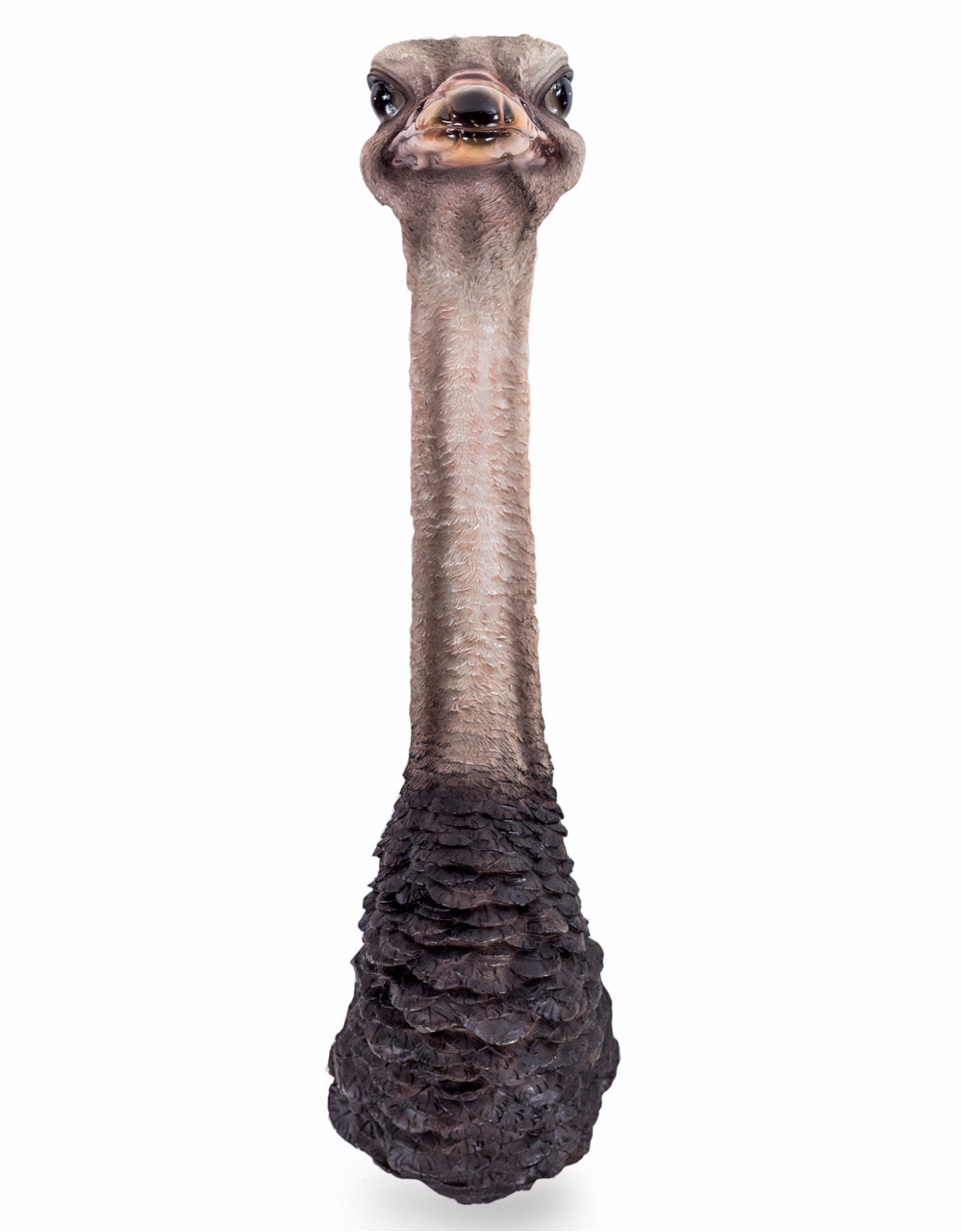 Ostrich Head Wall Figure - Wild Atlantic Living