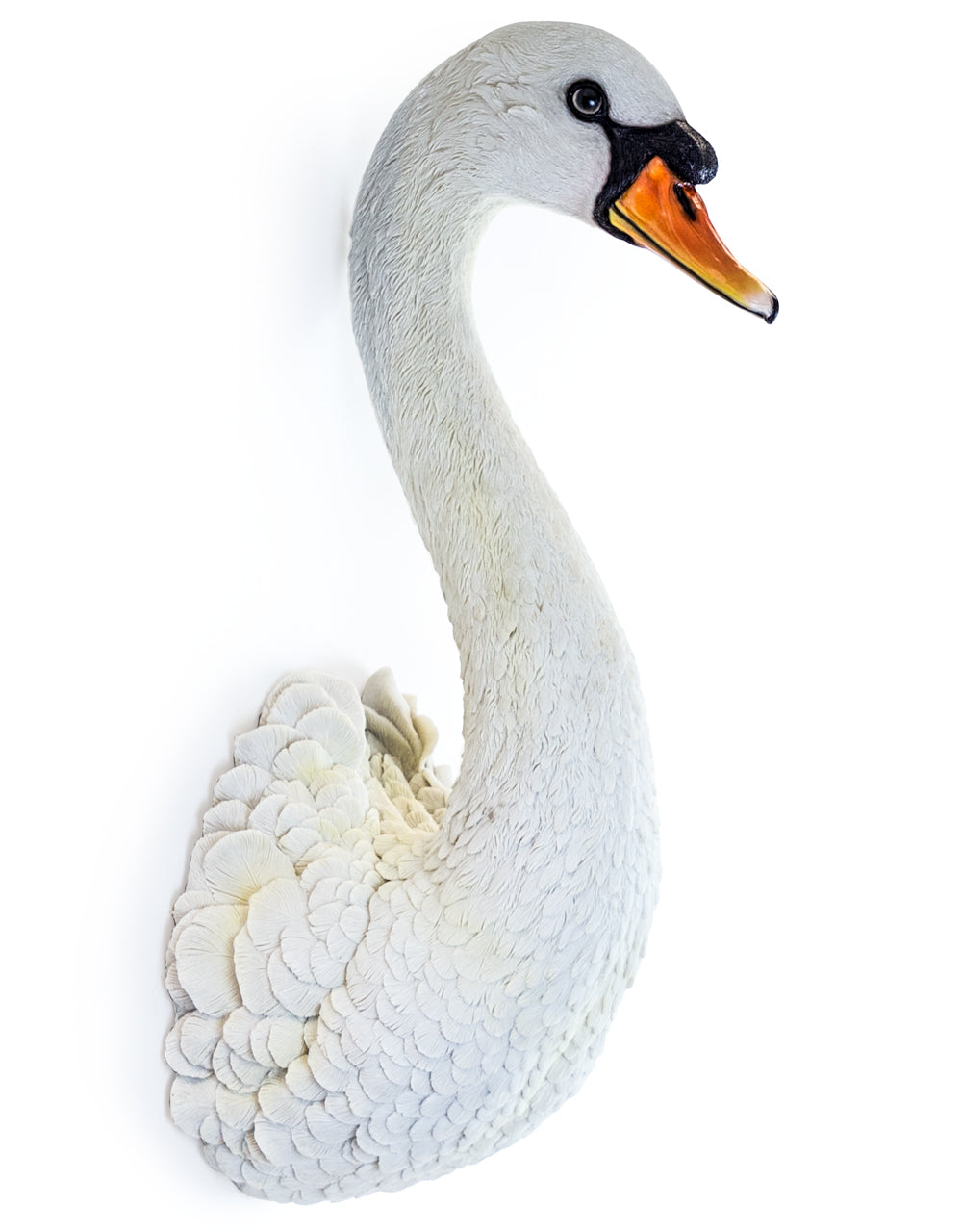 Large White Swan Head