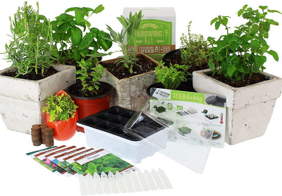 Culinary Indoor Herb Garden Starter Kit | Basic Herb Seeds - Waste Not Dots
