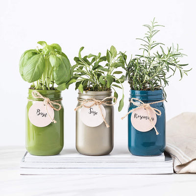 Mason Jar Garden, Grow Your Own Herbs Gift Set, Contains Rosemary, Basil and Sage Seeds with 6 Soil Pods