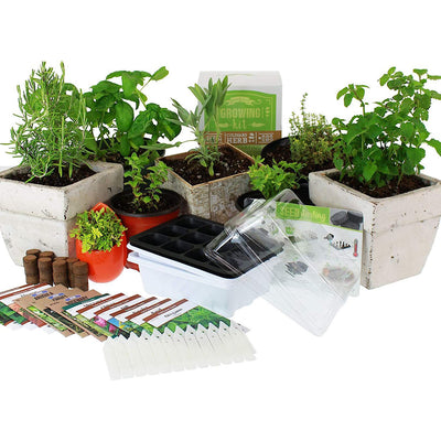 Culinary Indoor Herb Garden Starter Kit | Deluxe Herb Seeds | 12 Non-GMO Varieties | Grow Cooking Herbs & Spices | Seeds: Cilantro, Arugula, Thyme, Sage, Chives, Dill, Basil, More