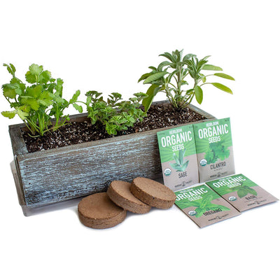 Culinary Indoor Herb Garden Kit with Reclaimed Barnwood Style Planter - Aged Brown - Grow Cooking Herbs - Non-GMO, Organic Seeds: Basil, Cilantro, Oregano & Salvia officinalis - Windowsill Gardening