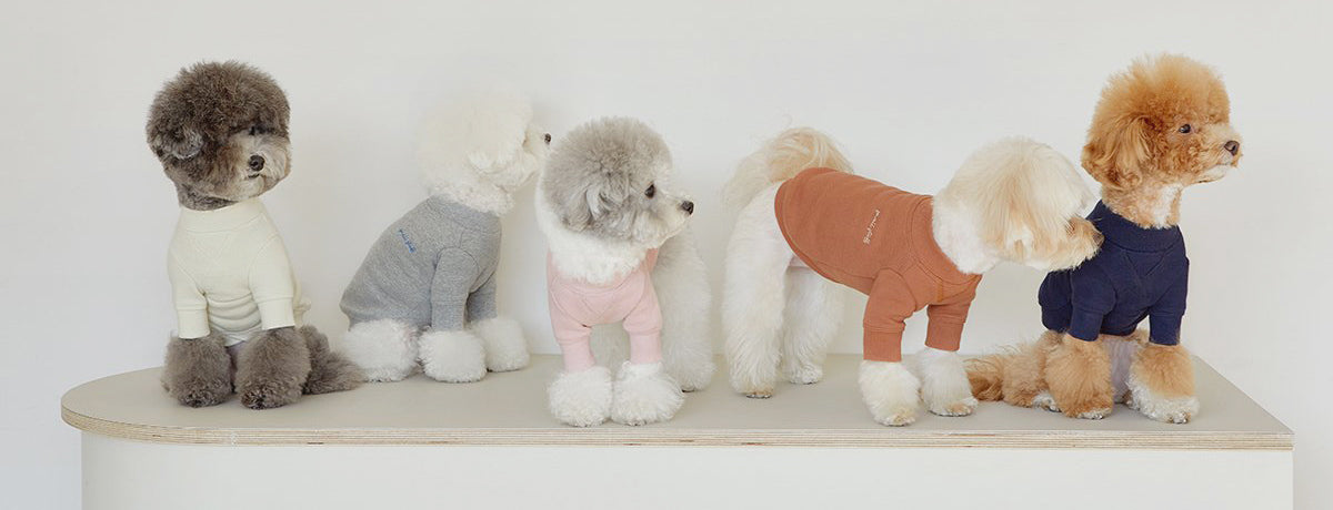 Cute dogs wearing fashionable clothing