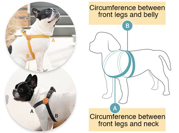 how to measure dog harness size