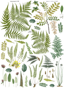 Frond Botanical 24 x 33 Transfer
