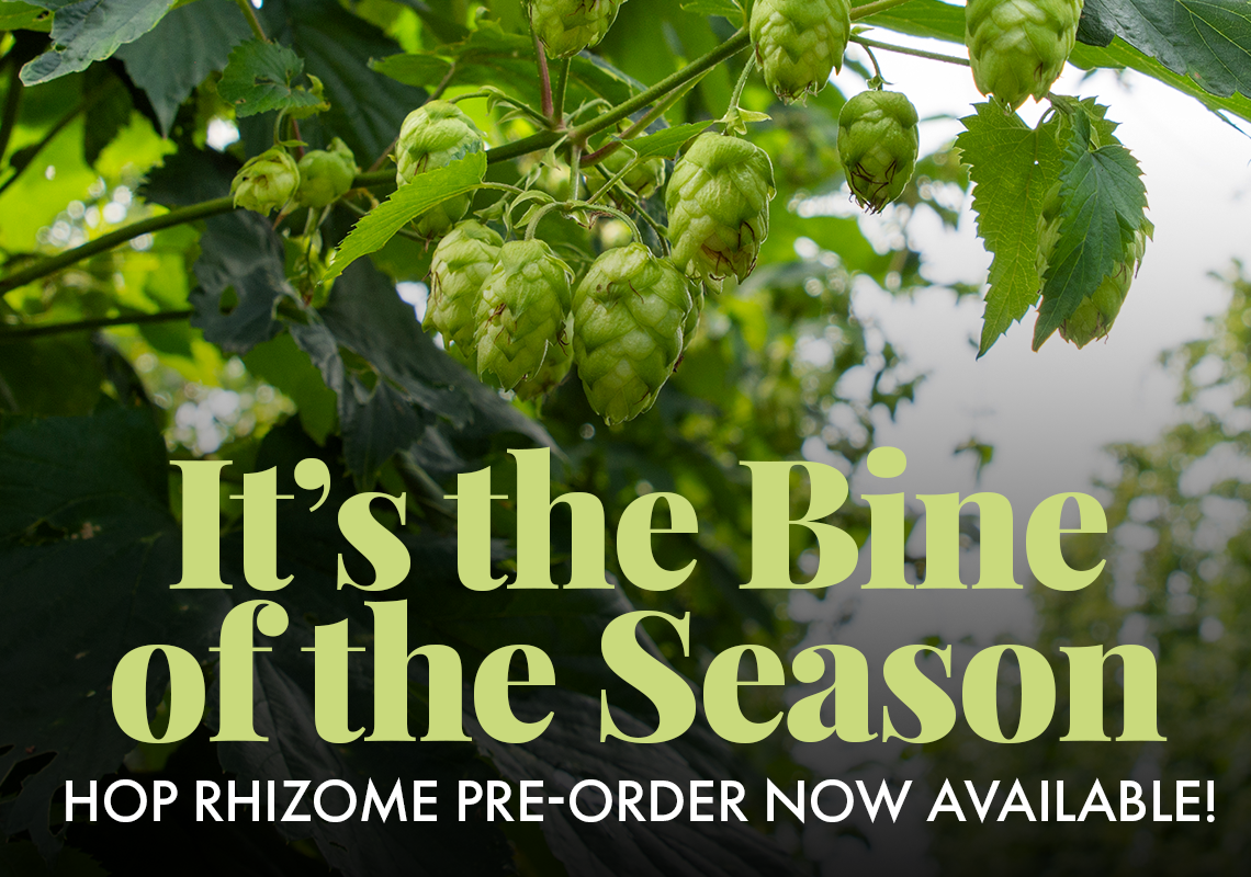 It's the bine of the season. Hop Rhizome Pre-Orders now available!