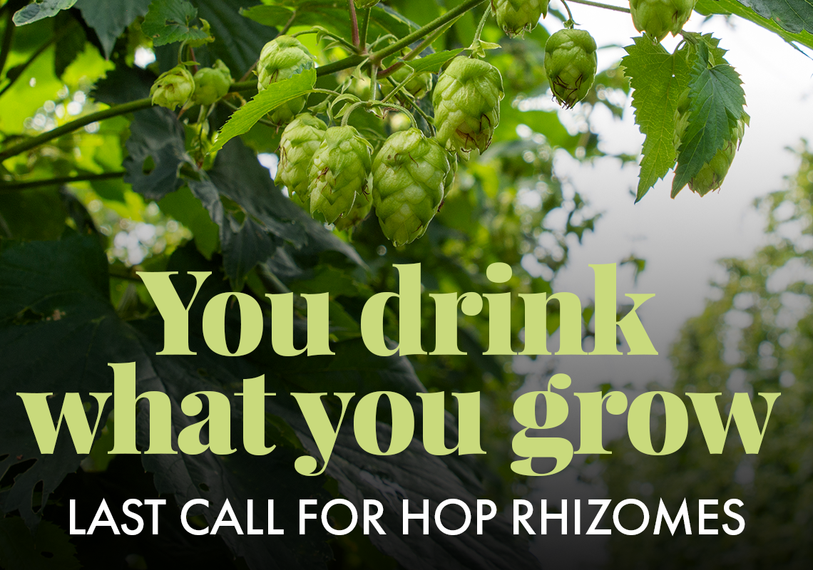 Last Call for Hop Rhizomes. Available until June 7, 2020.