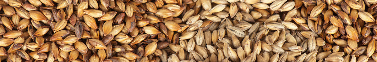 Brewing Malt, Grain & Adjunct