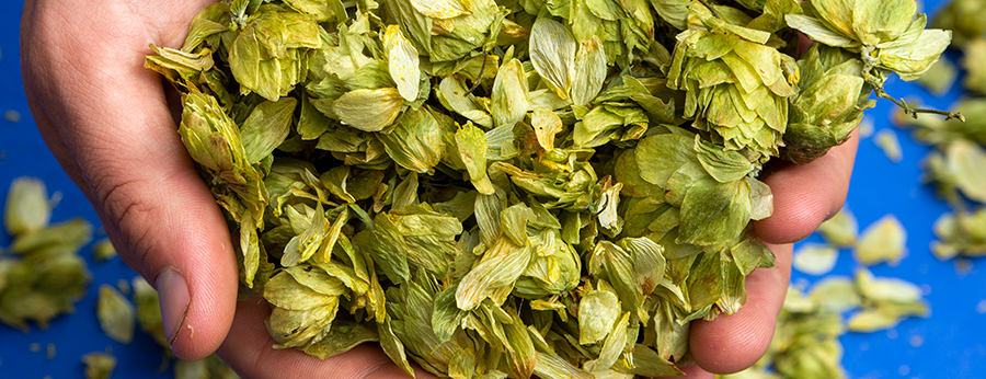 What is Dry Hopping?