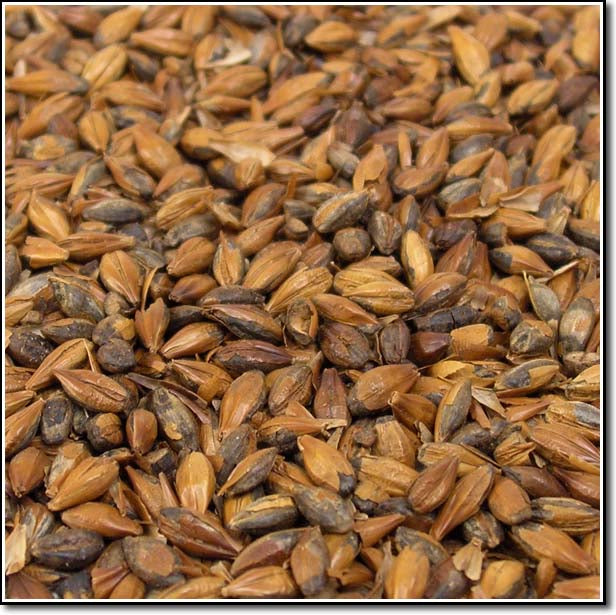 Close-up view of Briess Light Roasted Barley