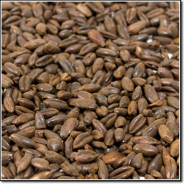 Weyermann Chocolate Rye Malted Grain