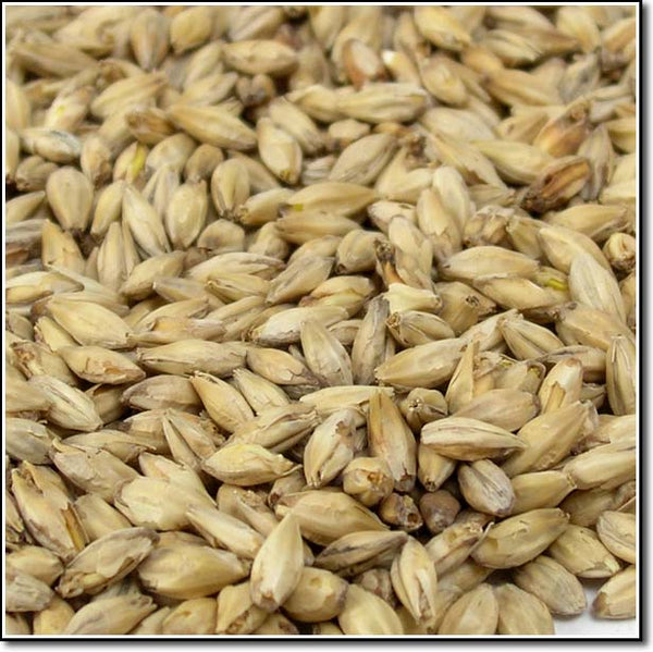 Close-up view of Briess Ashburne® Mild Malt