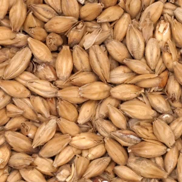 Close-up of Warminster Floor Malted Maris Otter Malt