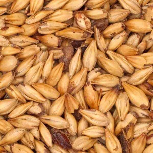 Close-up view of Best Malz Red X® Malt