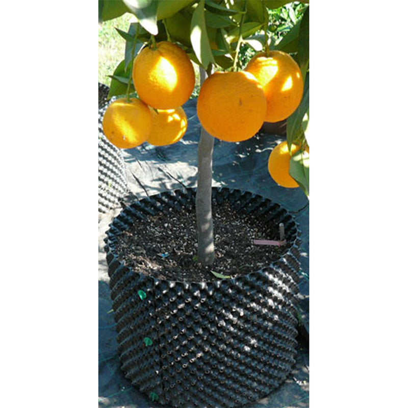 The 20-liter air pot with an orange tree growing in it