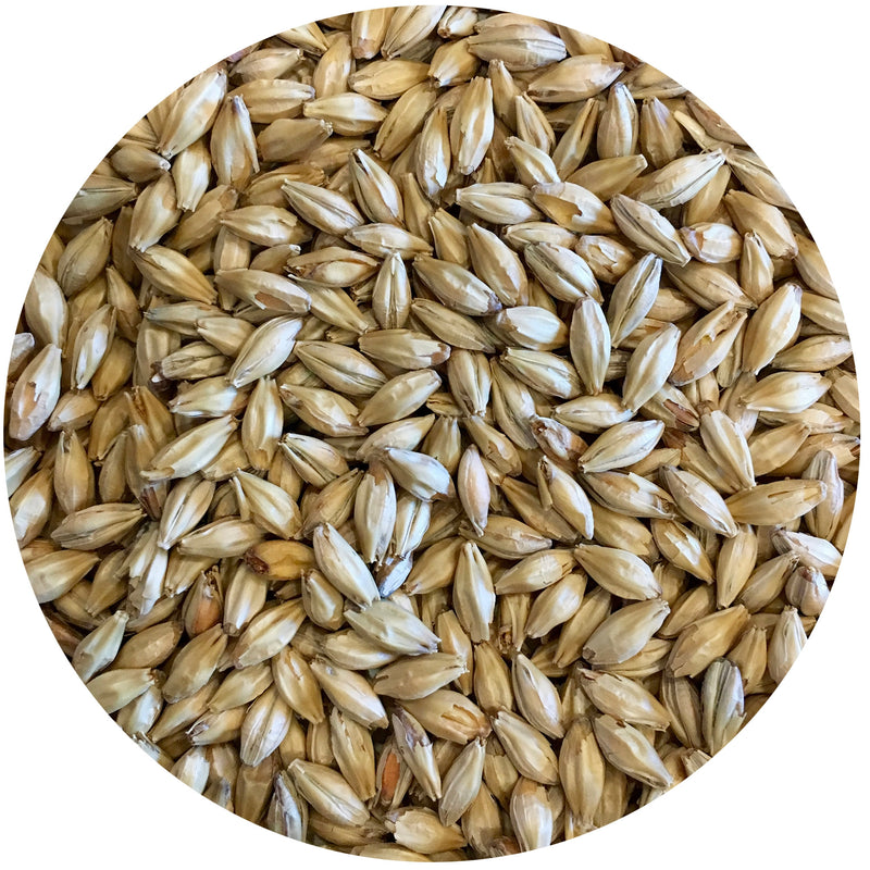 Close-up of Mecca Grade Vanora Malt