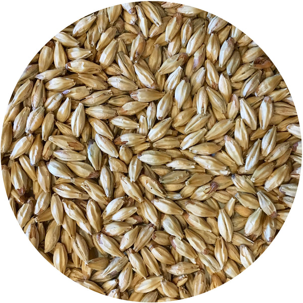 Close-up of Mecca Grade Metolius Malt