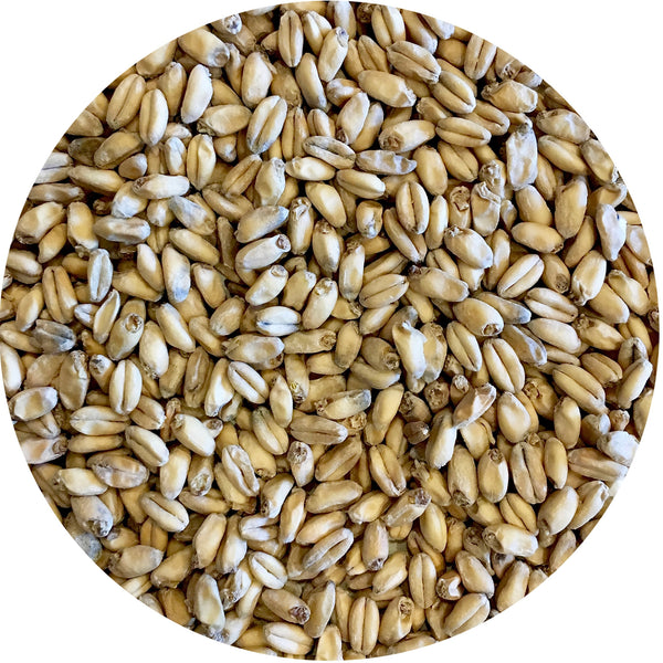 Close-up of Mecca Grade Shaniko Malt