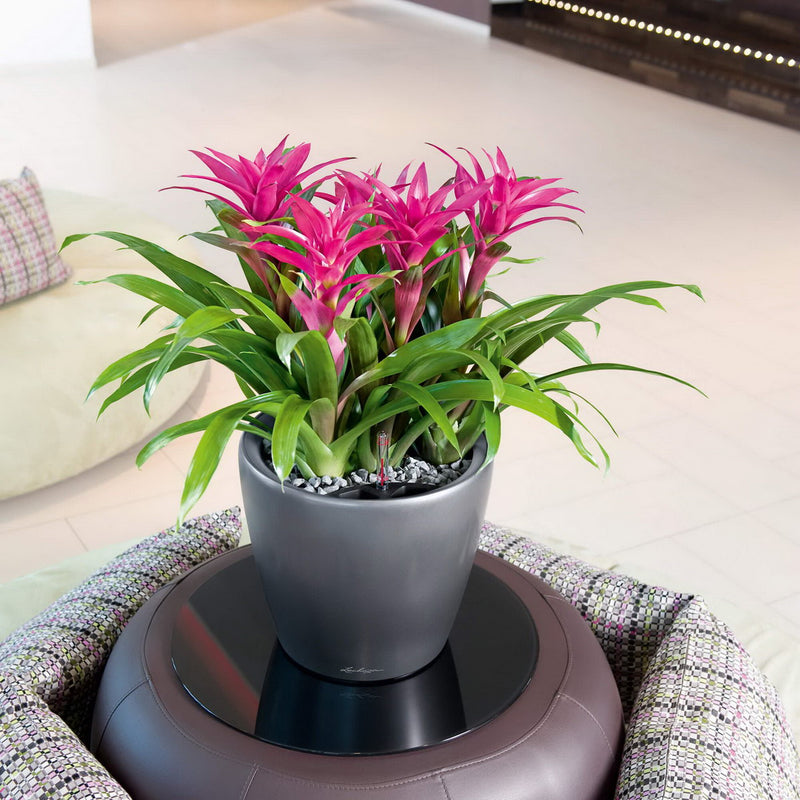 LECHUZA CLASSICO 35 LS  High-gloss Poly Resin Floor Self-watering Planter with Substrate D35 H33 cm