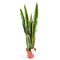 Artificial Medium 80cm Sansweieria Plant