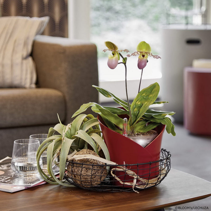 LECHUZA ORCHIDEA Matt Poly Resin Table Self-watering Planter with Substrate D18 H19,5 cm