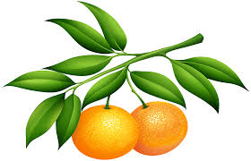 tangerine fragrance oil by aroma delights