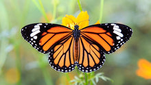 Load image into Gallery viewer, Beautiful Butterfly