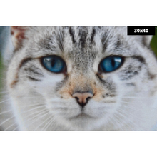Load image into Gallery viewer, Cute Cat