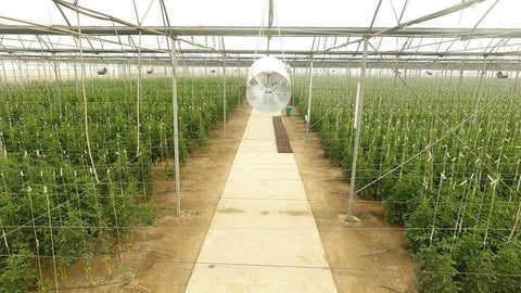 Fruits and Vegetables, Greenhouse, Organic Shop, Natural dairy products