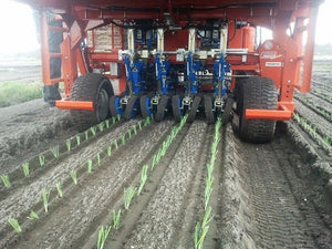 Ferrari Futura Twin Automated Transplanter