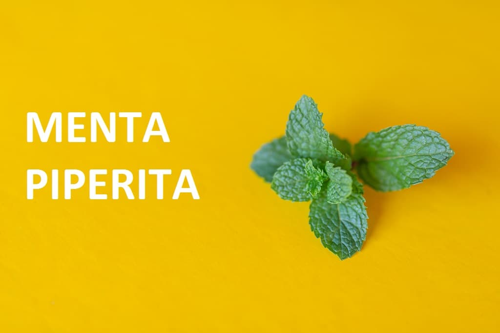 menta piperita ingrediente siil