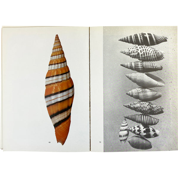 THE SHELL - 500 MILLION YEARS OF INSPIRED DESIGN BOOK