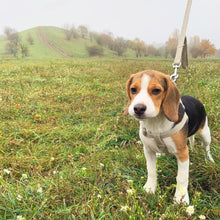 Load image into Gallery viewer, beagle puppy hemp harness no pull gnaw dog earth eco