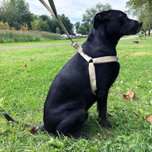 Load image into Gallery viewer, castle klepacz veteran owned black lab hemp harness eco plant based friendly strong.